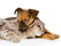 Dog and cat lying together.  on white background Royalty Free Stock Photo