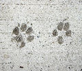 Dog and Cat paw prints Royalty Free Stock Photo