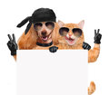 Dog and cat with peace fingers in black leather gloves Royalty Free Stock Photo