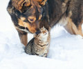 Dog and cat playing in the snow together outdoor Royalty Free Stock Images