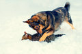Dog and cat playing in the snow together outdoor Stock Photos