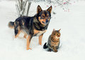 Dog and cat playing in the snow together outdoor Royalty Free Stock Photography