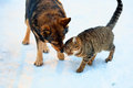 Dog and cat playing in the snow together outdoor Royalty Free Stock Image