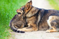 Dog and cat playing together outdoor Stock Image