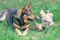 Dog and cat playing together outdoor lying on the back Royalty Free Stock Image