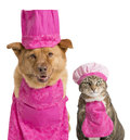Dog and cat ready for cooking wearing chef hats aprons Royalty Free Stock Photos