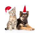 Dog and cat in red christmas hats looking at camera. isolated on white Royalty Free Stock Photo