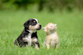 Dog and cat siiting on meadow Stock Images