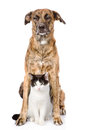 Dog And Cat Sitting In Front. ...