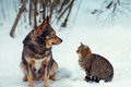Dog and cat sitting together in the snow Royalty Free Stock Photo