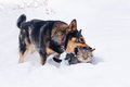 Dog and cat in snow playing the Stock Photo