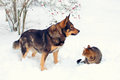 Dog and cat in snow playing the Stock Photography