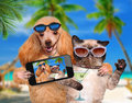 Dog with cat taking a selfie together with a smartphone beach Royalty Free Stock Image