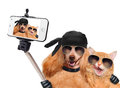 Dog with cat taking a selfie together with a smartphone Royalty Free Stock Photo