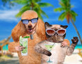 Dog with cat taking a selfie together with a tablet in the tropics Royalty Free Stock Image