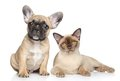 Dog and cat on a white background Stock Photography