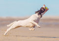Dog catching ball at full length showing athleticism Royalty Free Stock Images