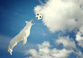 Dog catching a ball in midair
