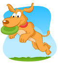 Dog catching frisbee Stock Images