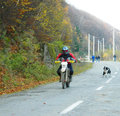 Dog chasing KTM Enduro motorcycles and riders