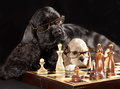 Dog and chess with glasses playing Royalty Free Stock Photography