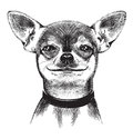 Dog Chihuahua. Illustration Royalty Free Stock Photos