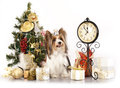 Dog  and Christmas Gift Stock Image