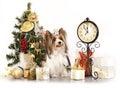 Dog  and Christmas Gift Stock Image
