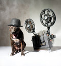 Dog and cinema american staffordshire terrier movie projector with the film Royalty Free Stock Photo