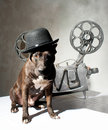 Dog and cinema american staffordshire terrier movie projector with the film Stock Photo