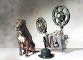 Dog and cinema american staffordshire terrier movie projector with the film Royalty Free Stock Image