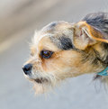 Dog closeup a view from a cute closep Royalty Free Stock Photography