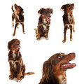 Dog collection Stock Photo