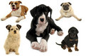 Dog collection on white background Stock Image