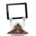 Dog computer holding a tablet pc lying upside down Stock Image