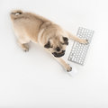 Dog with computer keyboard top view of funny using and mouse while on white Royalty Free Stock Photography