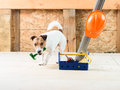 Dog at construction site coming on camera and fetching hammer Royalty Free Stock Photo
