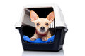 Dog crate box chihuahua inside a or for animals waiting for an owner isolated on white background Royalty Free Stock Photos
