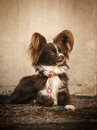 Dog cute posing in front of the camera Royalty Free Stock Photography
