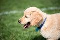 Dog Daze Royalty Free Stock Photo