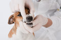 Dog dental Stock Images