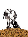 Dog do not want to eat dry food. He prefers meat and natural pro Royalty Free Stock Photo