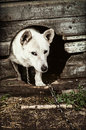 Dog in the doghouse mixed breed Royalty Free Stock Photo