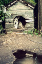 Dog in the doghouse mixed breed Royalty Free Stock Photos