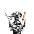 Dog doing grooming with scissors and comb Royalty Free Stock Photo