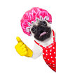 Dog doing household chores pug with rubber gloves and shower cap isolated on white background Stock Photography
