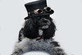 Dog with dracula  topper Royalty Free Stock Photo