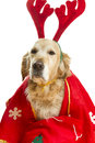 Dog dressed as Santa Claus Stock Images
