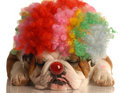 Dog dressed up as clown Stock Photos