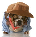 Dog dressed up as a cowboy Royalty Free Stock Image